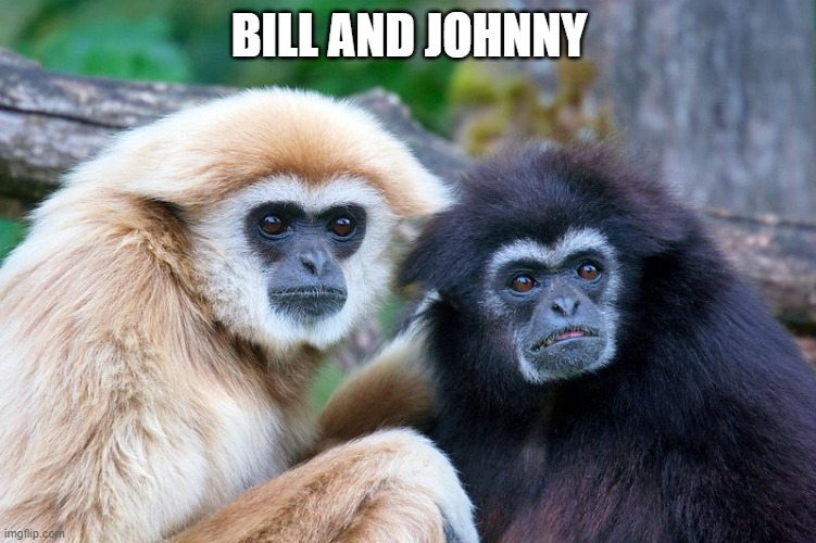 Bill and Johnny |  BILL AND JOHNNY | image tagged in two gibbons,monke,monkeys,monkey,gibbon,gibbons | made w/ Imgflip meme maker
