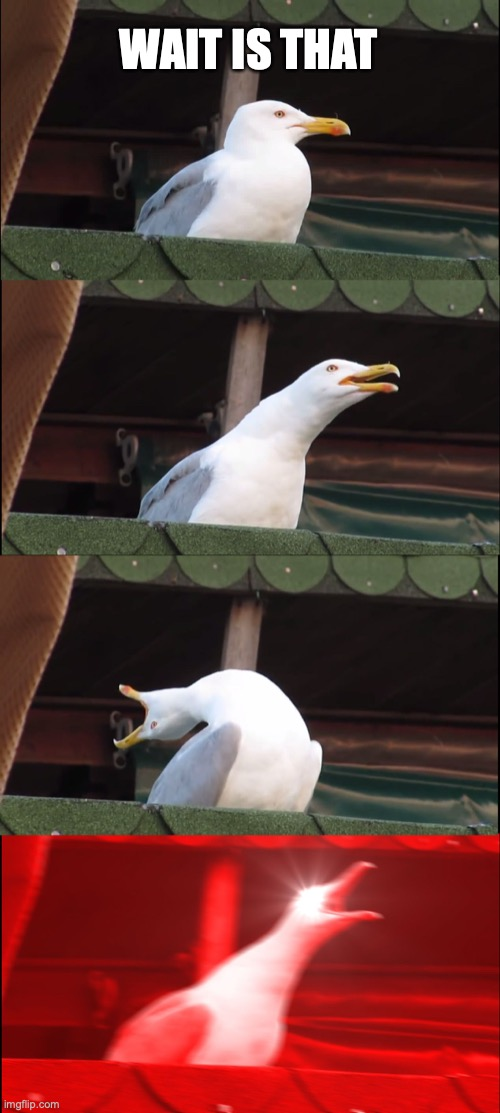 Uh oh |  WAIT IS THAT | image tagged in memes,inhaling seagull | made w/ Imgflip meme maker