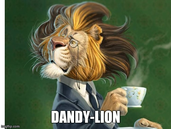 Don't pick this flower |  DANDY-LION | image tagged in memes,dandelion,lion,flowers,tea,fun | made w/ Imgflip meme maker