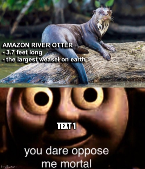 The largest weasel on earth |  TEXT 1 | image tagged in the largest weasel on earth | made w/ Imgflip meme maker