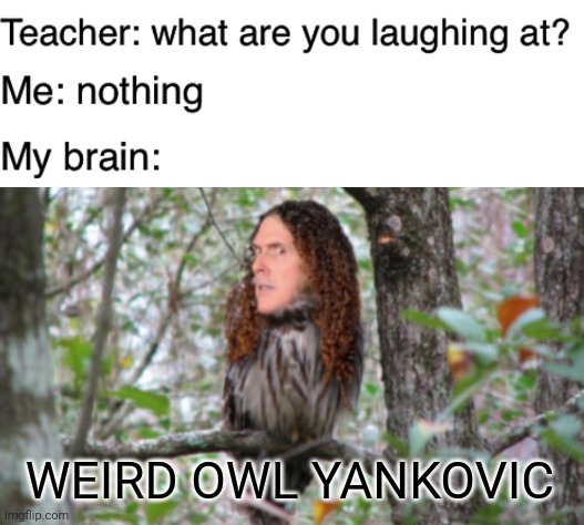 Weird Owl Yankovic |  WEIRD OWL YANKOVIC | image tagged in teacher what are you laughing at,funny,memes,weird al yankovic,lol | made w/ Imgflip meme maker