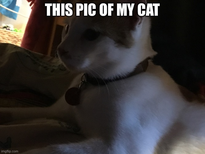 Oootdles |  THIS PIC OF MY CAT | image tagged in emoji | made w/ Imgflip meme maker