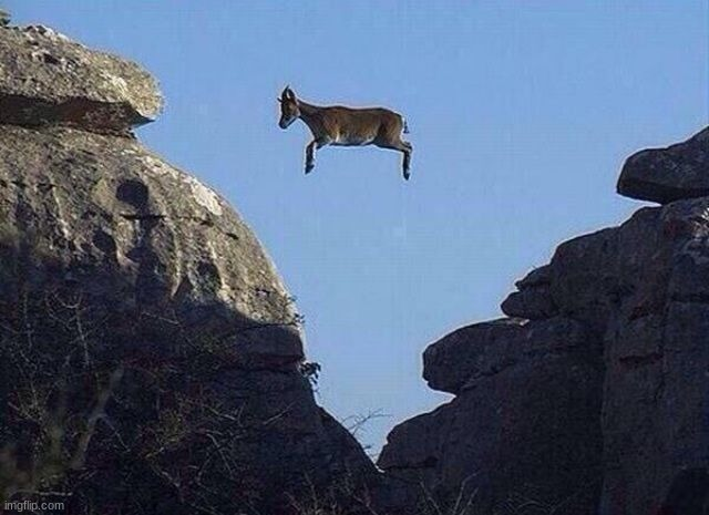 Whatever floats your goat | image tagged in whatever floats your goat | made w/ Imgflip meme maker