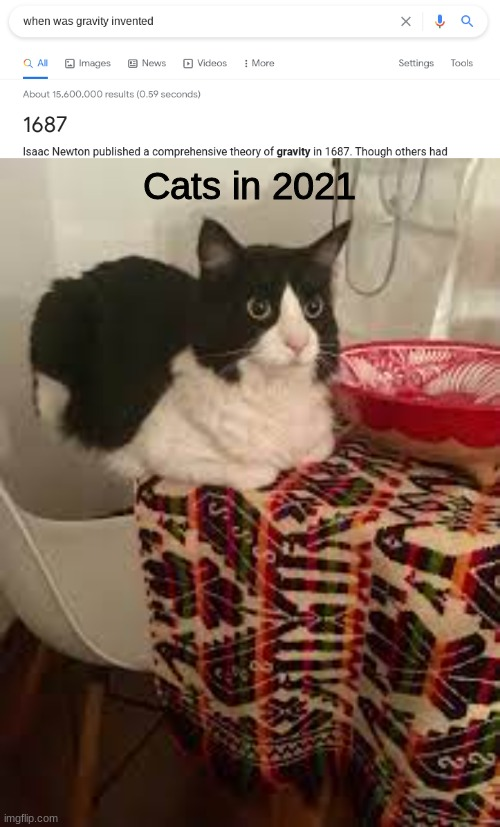 how |  Cats in 2021 | image tagged in cats | made w/ Imgflip meme maker