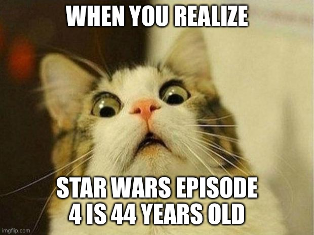 It's true, all of it |  WHEN YOU REALIZE; STAR WARS EPISODE 4 IS 44 YEARS OLD | image tagged in scared cat,funny,star wars,movies,old | made w/ Imgflip meme maker