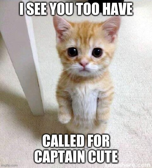 Cute Cat Meme |  I SEE YOU TOO HAVE; CALLED FOR CAPTAIN CUTE | image tagged in memes,cute cat | made w/ Imgflip meme maker