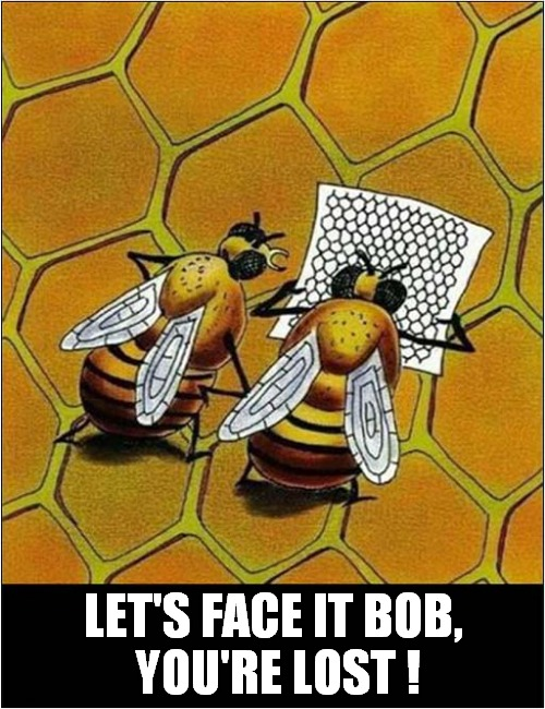 A Disoriented Bee ! |  LET'S FACE IT BOB,  YOU'RE LOST ! | image tagged in fun,bees,lost | made w/ Imgflip meme maker