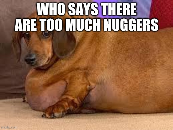 fat dog |  WHO SAYS THERE ARE TOO MUCH NUGGERS | image tagged in fat dog | made w/ Imgflip meme maker