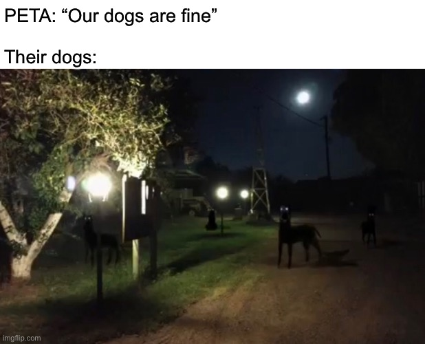 "Zombo |  PETA: ""Our dogs are fine""   Their dogs: 