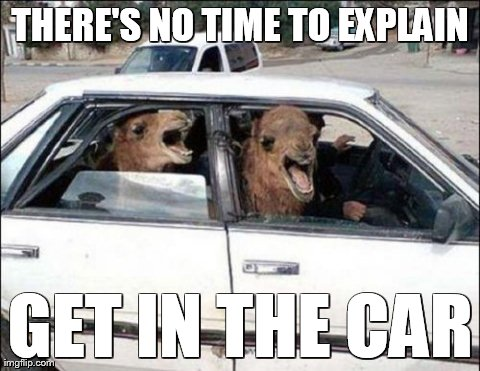 There's no time to explain | THERE'S NO TIME TO EXPLAIN GET IN THE CAR | image tagged in memes,quit hatin,funny,animals | made w/ Imgflip meme maker
