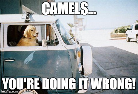CAMELS... YOU'RE DOING IT WRONG! | image tagged in dog drives | made w/ Imgflip meme maker