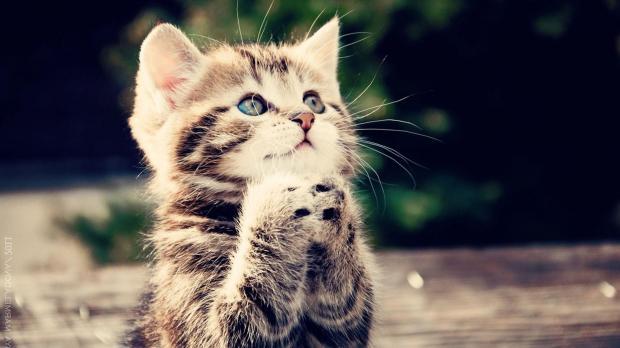High Quality Praying cat Blank Meme Template
