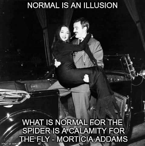 Normal is an illusion imgflip normal is an illusion normal is an illusion what is normal for the spider is altavistaventures Choice Image