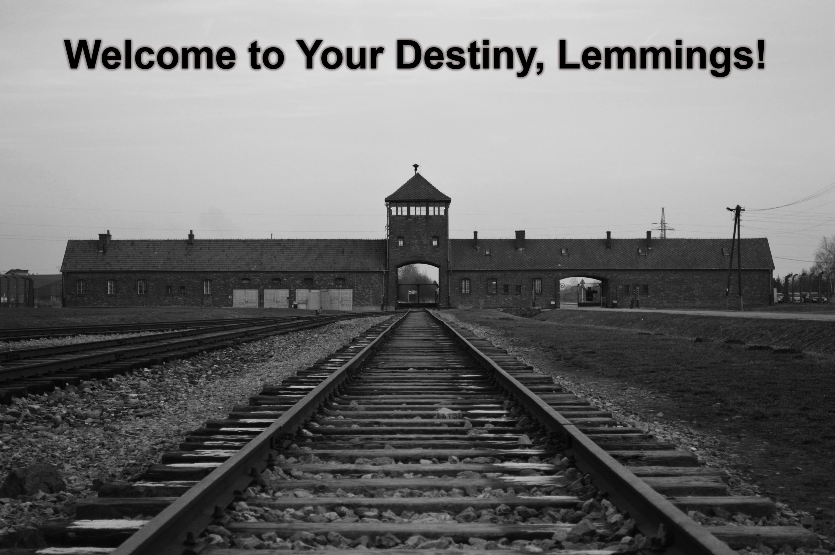 Welcome to Your Destiny, Lemmings!   image tagged in lemmings,sheeple,covidiots,covid vaccine,final destination,99 percent survival rate   made w/ Imgflip meme maker