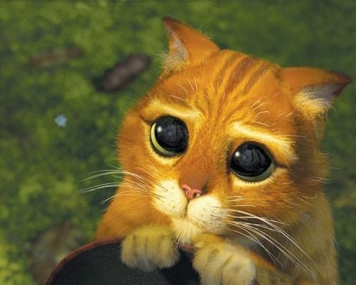 Sad Cat Blank Template Imgflip