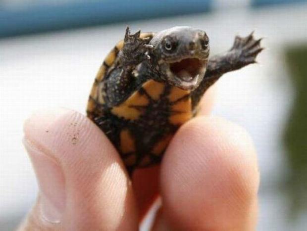 5s78h?a417672 happy baby turtle meme generator imgflip,Turtle Meme Generator