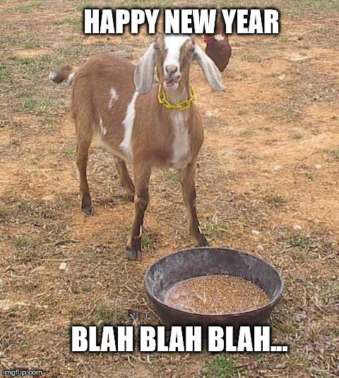 grumpy goat grumpy goat happy new year