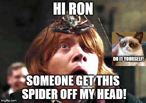 Ron spider and cat imgflip ron spider and cat hi ron someone get this spider off my head do solutioingenieria Images