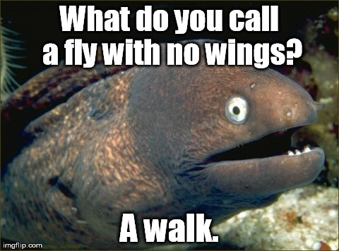 One does not simply ... | What do you call a fly with no wings? A walk. | image tagged in memes,bad joke eel | made w/ Imgflip meme maker