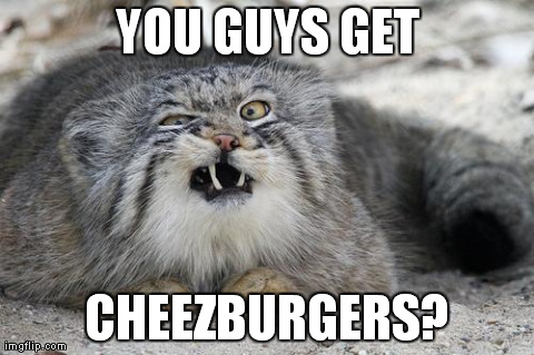 YOU GUYS GET CHEEZBURGERS? | image tagged in manul | made w/ Imgflip meme maker