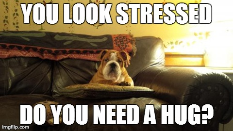 YOU LOOK STRESSED DO YOU NEED A HUG? | image tagged in stressed,dogs | made w/ Imgflip meme maker