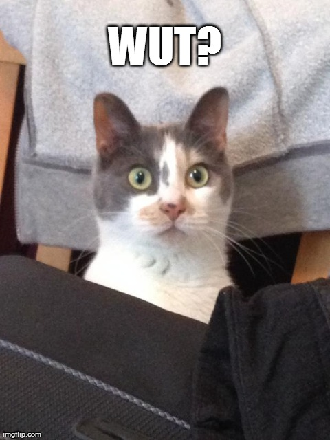 Confused kitteh | WUT? | image tagged in funny,cats,confused cat | made w/ Imgflip meme maker