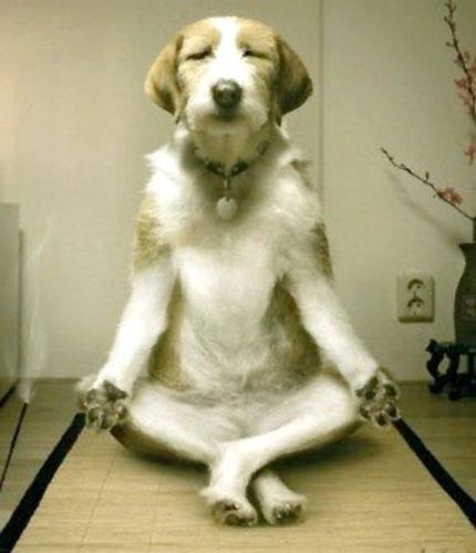 Inner Peace Dog Meme Template