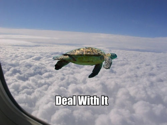 Flying turtle meme - photo#3
