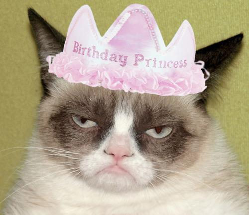 Birthday Meme Grumpy Cat Pics Photos - Grumpy C...