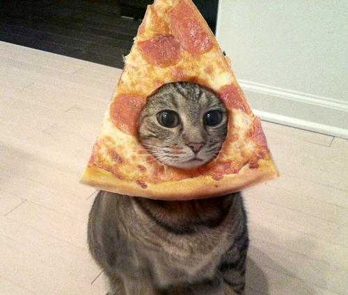 pizza cat Meme Generator - Imgflip