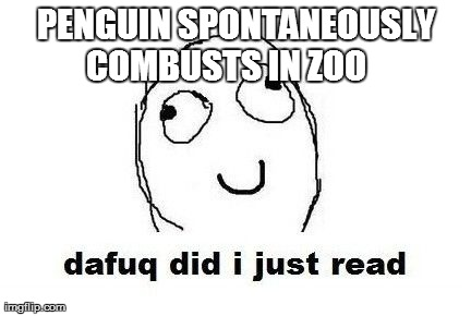 Dafuq Did I Just Read | PENGUIN SPONTANEOUSLY COMBUSTS IN ZOO | image tagged in memes,dafuq did i just read | made w/ Imgflip meme maker