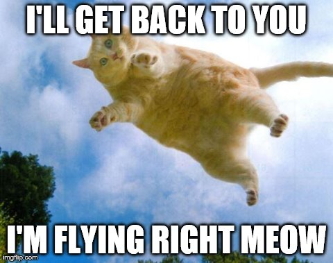 I Believe I Can Fly Funny Cat Videos