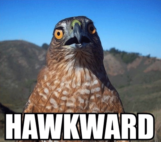 Hawkward | image tagged in memes,hawkward