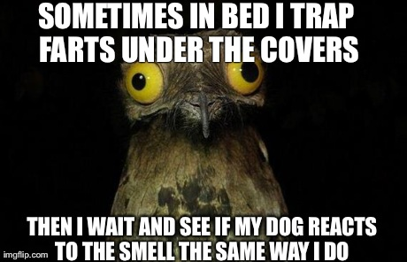 Weird Stuff I Do Potoo Meme | SOMETIMES IN BED I TRAP FARTS UNDER THE COVERS THEN I WAIT AND SEE IF MY DOG REACTS TO THE SMELL THE SAME WAY I DO | image tagged in memes,weird stuff i do potoo,AdviceAnimals | made w/ Imgflip meme maker