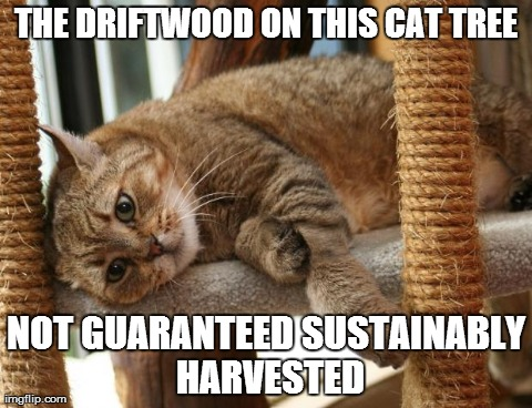 First World Cat Problems | THE DRIFTWOOD ON THIS CAT TREE NOT GUARANTEED SUSTAINABLY HARVESTED | image tagged in first world cat problems | made w/ Imgflip meme maker