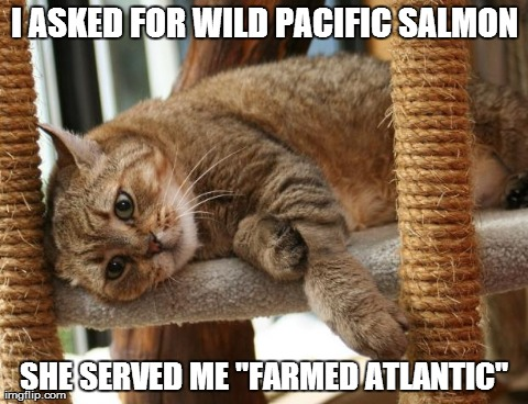 "First World Cat Problems | I ASKED FOR WILD PACIFIC SALMON SHE SERVED ME ""FARMED ATLANTIC"" 