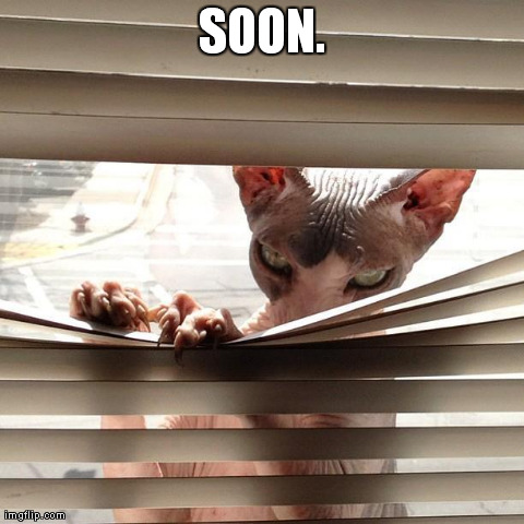SOON. | image tagged in malicious cat,cats,evil | made w/ Imgflip meme maker