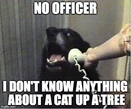 Yes this is dog | NO OFFICER I DON'T KNOW ANYTHING ABOUT A CAT UP A TREE | image tagged in yes this is dog | made w/ Imgflip meme maker
