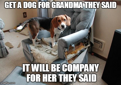 7x85e a dog for grandma imgflip