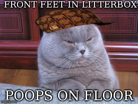 FRONT FEET IN LITTERBOX POOPS ON FLOOR | Image Tagged In Funny,cats | Made