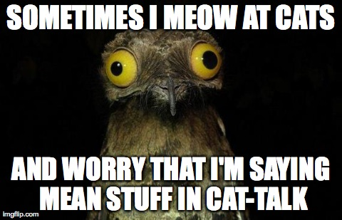 Weird Stuff I Do Potoo Meme | SOMETIMES I MEOW AT CATS AND WORRY THAT I'M SAYING MEAN STUFF IN CAT-TALK | image tagged in memes,weird stuff i do potoo,AdviceAnimals | made w/ Imgflip meme maker