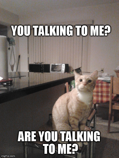 you talking to me? | YOU TALKING TO ME? ARE YOU TALKING TO ME? | image tagged in memes,animals,cats,funny,hilarious | made w/ Imgflip meme maker