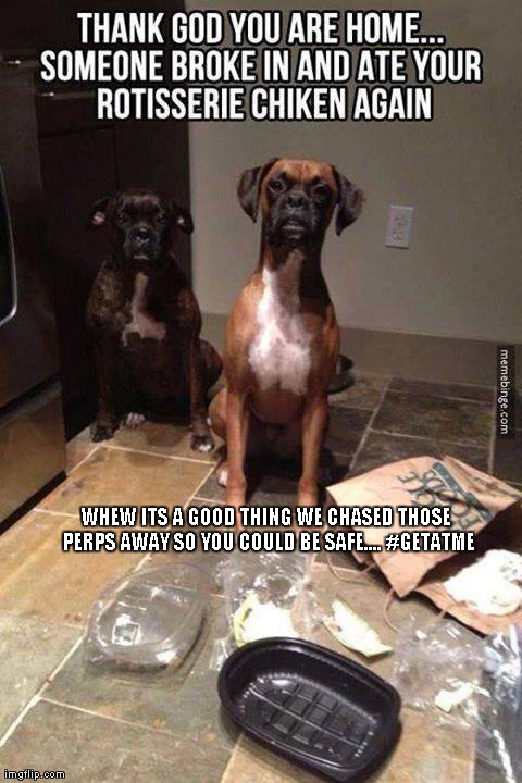 Thank god your home | WHEW ITS A GOOD THING WE CHASED THOSE PERPS AWAY SO YOU COULD BE SAFE.... #GETATME | image tagged in funny,animals,dogs,too funny,hip hop,now that funny | made w/ Imgflip meme maker