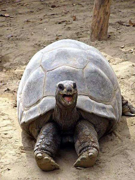 Smiling happy excited tortoise Meme Template