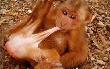 Sex with monkeys photos