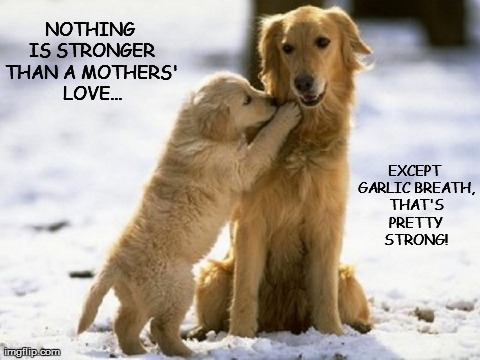 8p2e4 mothers day pooches imgflip