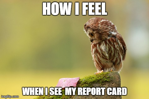 Looking At Report Cards | HOW I FEEL WHEN I SEE  MY REPORT CARD | image tagged in memes,funny,animals,owls,grades,schools | made w/ Imgflip meme maker
