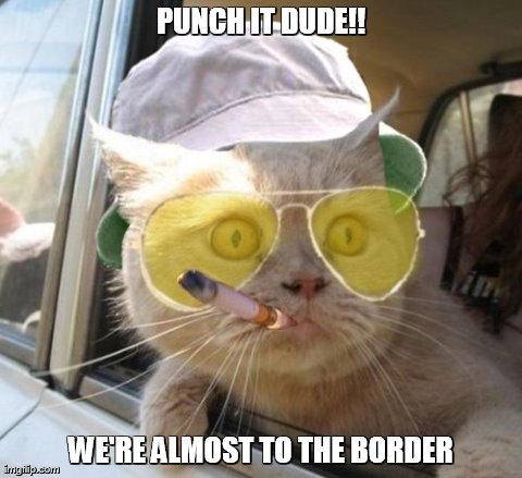 Fear And Loathing Cat | PUNCH IT DUDE!! WE'RE ALMOST TO THE BORDER | image tagged in memes,fear and loathing cat | made w/ Imgflip meme maker
