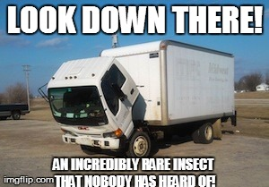 Okay Truck | LOOK DOWN THERE! AN INCREDIBLY RARE INSECT THAT NOBODY HAS HEARD OF! | image tagged in memes,okay truck | made w/ Imgflip meme maker