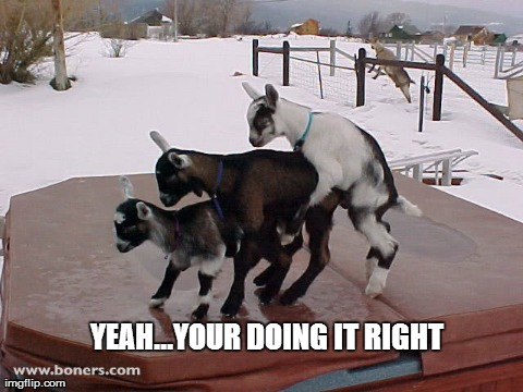 YEAH...YOUR DOING IT RIGHT | image tagged in funny,memes,goats,goat | made w/ Imgflip meme maker